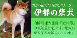 九州福岡の柴犬ブリーダー「伊都の豆柴」:内閣総理大臣賞「徹錦号」の筑前重松荘です。元気な柴犬子犬を販売しています。